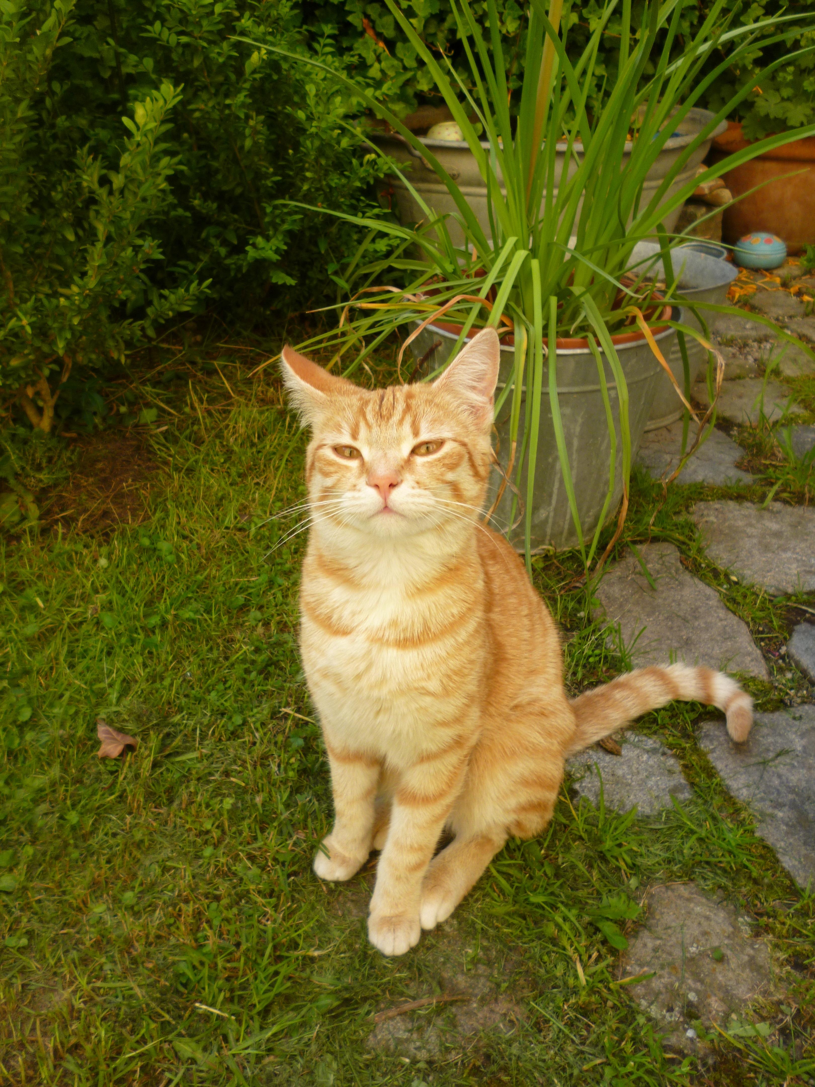 Katzenkorb Häkeln Kreativ Am Moniberg